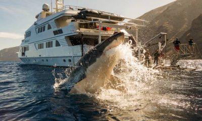 National Geographic felicita a Colombia por prohibir la pesca de tiburón