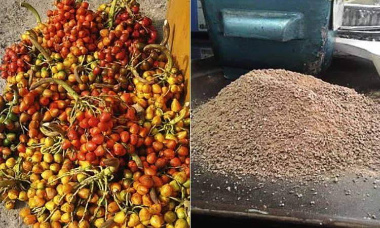 Estudiantes convierten las cáscaras de frutas en biocarbón