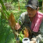 El proyecto de 235 campesinos que alrededor del cacao brilla como emprendimiento