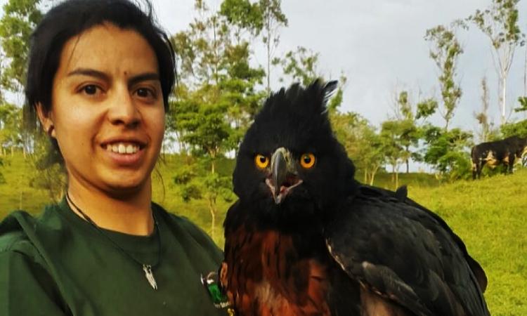 Colombiana busca proteger el águila real de montaña estudiando si come o no gallinas