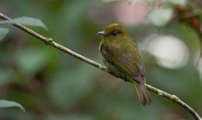 Hallan en Colombia 30 especies de aves nunca documentadas hasta ahora