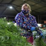 Plaza de Bogotá será piloto para estudio de plantas y saberes ancestrales