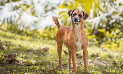 Antioquia registró un incremento en la tenencia de mascotas durante la pandemia
