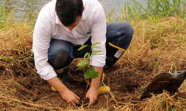Cafeteros aportarán 1 millón de árboles nativos en reforestación de Colombia