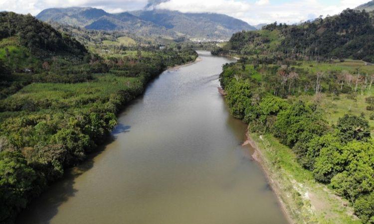 Sembrarán un millón de nuevos árboles en la Amazonía colombiana