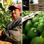 Colombia cuenta con dos laboratorios para certificar la calidad del café y aguacate Hass