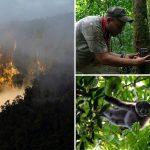 Expedición reveló la sorprendente biodiversidad que ocultaba el Parque Nacional Picachos