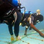 En San Andrés y Providencia cultivaron 13 mil colonias de corales en solo un año