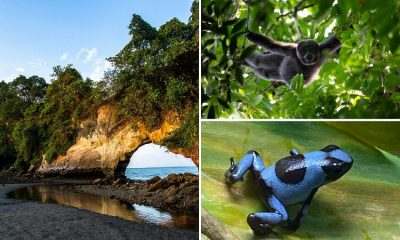 Los 5 destinos biodiversos que todo colombiano debe conocer