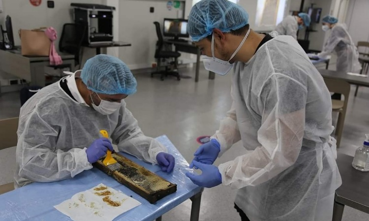 En la U. del Rosario crean superalimento para salvar a las abejas de los pesticidas